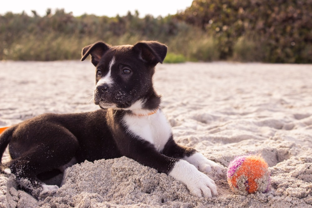 Why You Must Invest in Training Your Puppy?